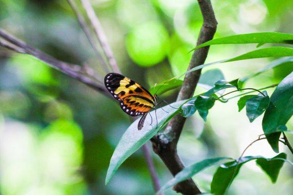 borboletas (1)