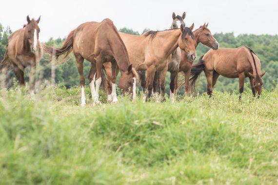 cavalos3